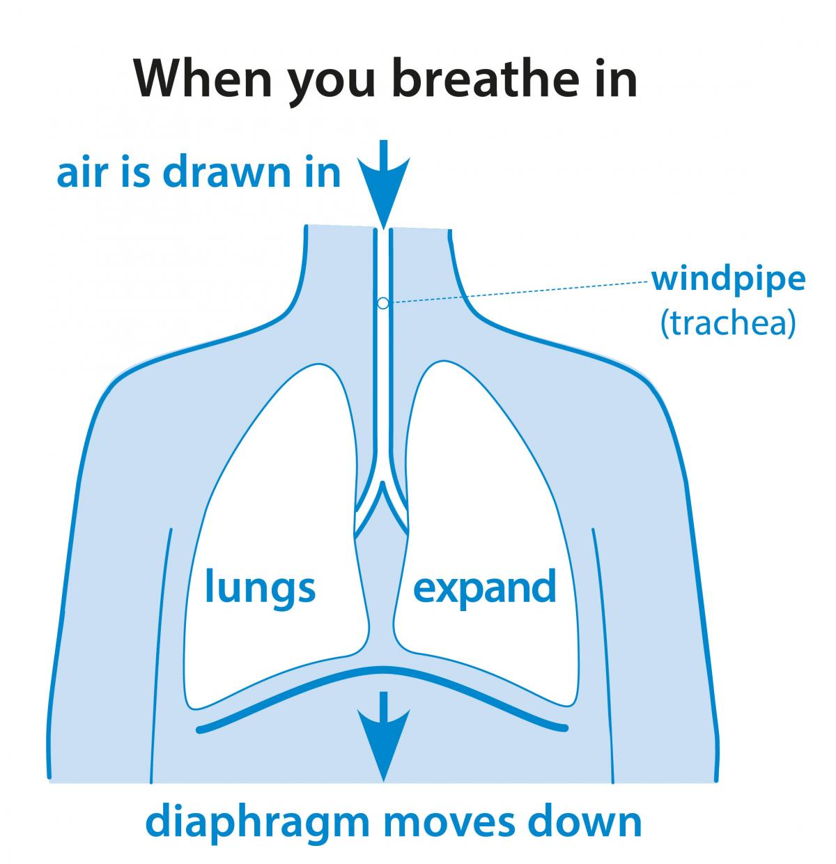 what are we breathing Before we sigh or cough we usually take a big breath which leads to irregular breathing snoring means we have to compensate through breathing faster a lot of us breathe quicker and louder when we talk.