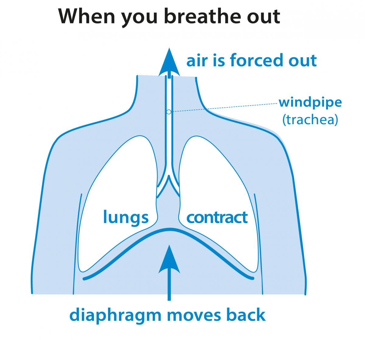 how do you breathe?