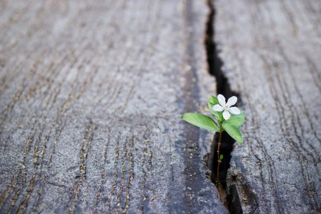 flower growing from crack