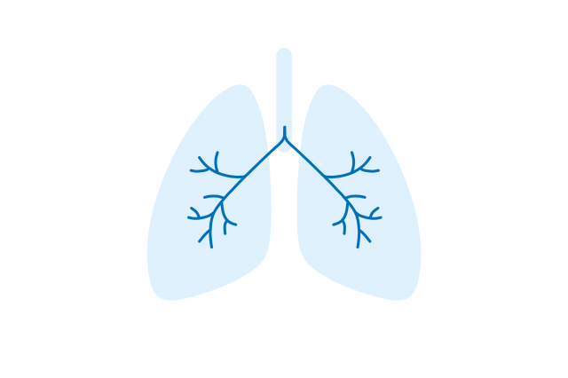 lungs infographic light blue outline