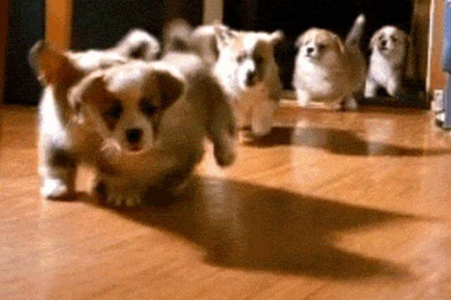 take steps dogs running gif